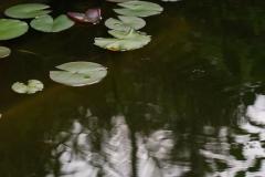 Zu lang belichteter Teich